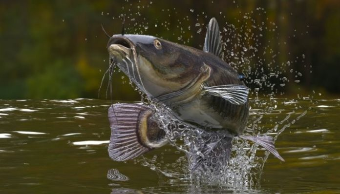Alternative Ways To Catch a Fish Without a Rod