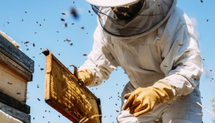 What Beekeepers Can Do To Protect Themselves From Stings